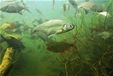 Akvárium Pod hladinou Vltavy